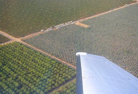 pom orchards 025