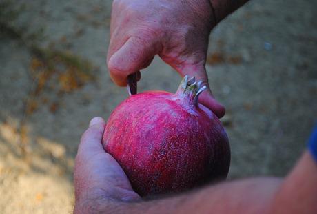 pom orchards 053
