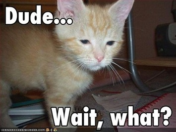 funny-pictures-kitten-is-confused