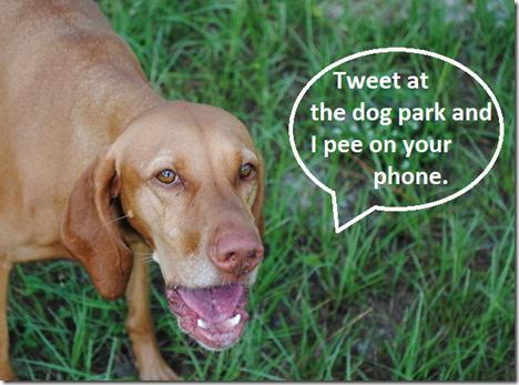 pee on phone
