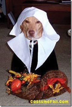dog pilgrim