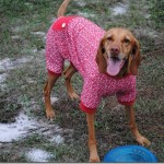dog pajamas red 023