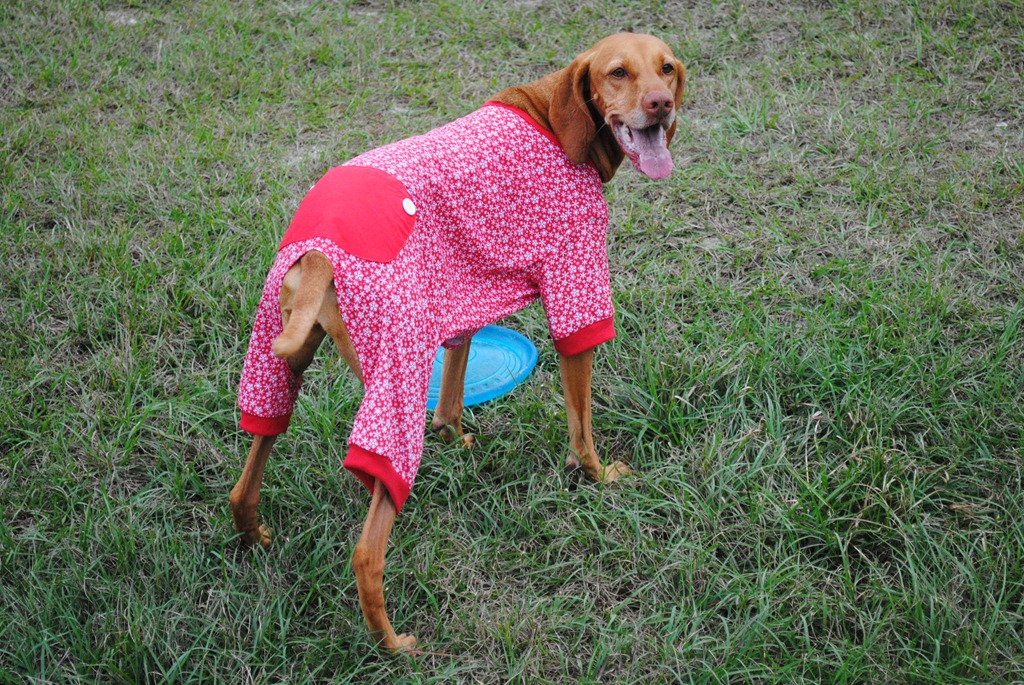Christmas Pajamas For Dog.Sadie S Christmas Pajamas Peanut Butter Fingers