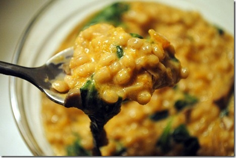 goat cheese and butternut squash barley risotto