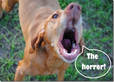 the horror