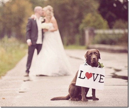 dog love sign