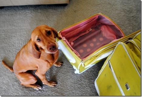 sad dog suitcase