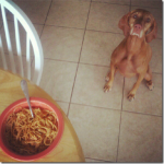 sadie wants pasta