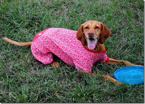 dog pajamas red 037