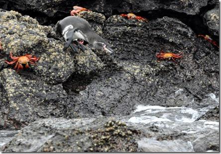 Bartolome Island penguin
