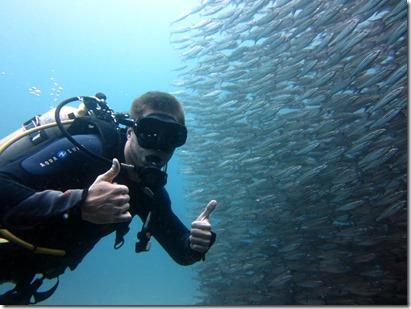Ryan school of fish