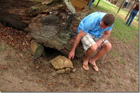 petting a tortoise