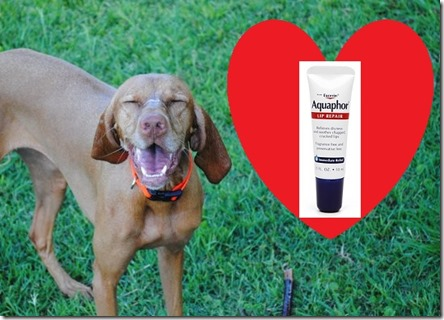 dog loves aquaphor