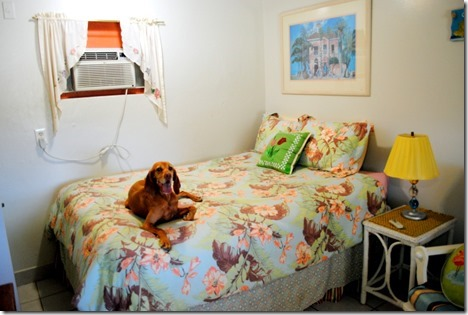 dog friendly florida hotel