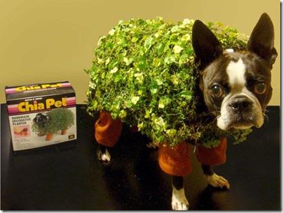 Chia Pet Dog