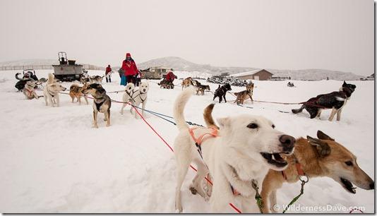 Park City Dog Sledding