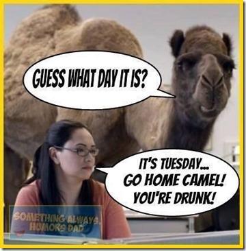 Go home camel