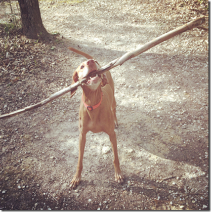 Small Dog with a Big Stick