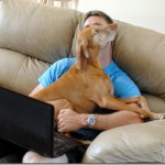Vizsla demanding attention