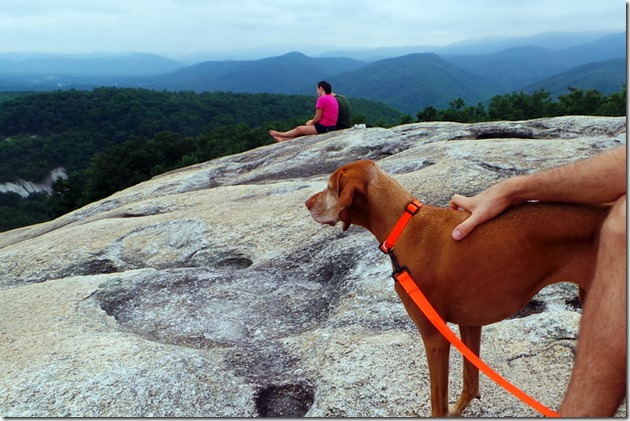 hiking vizsla