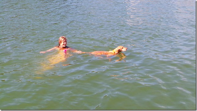 swimming vizsla