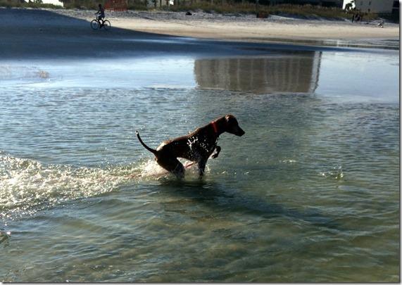 Dog Hunting Fish