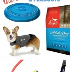 Best-Dog-Food-Toys-and-Products-For-Your-Dog.jpg
