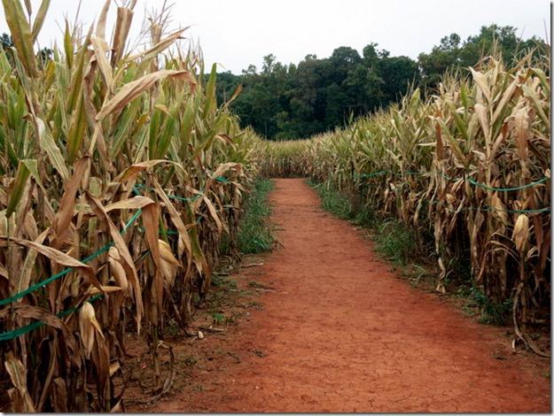 Corn Maze Charlotte