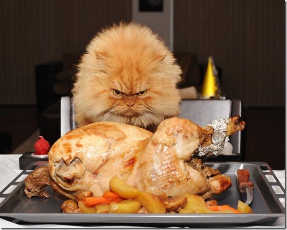 Garfi Angry Cat