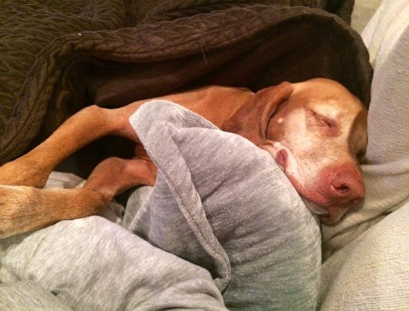 Sleepy Dog (2)