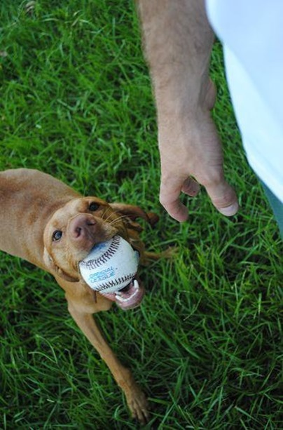 dog with ball_thumb[6]