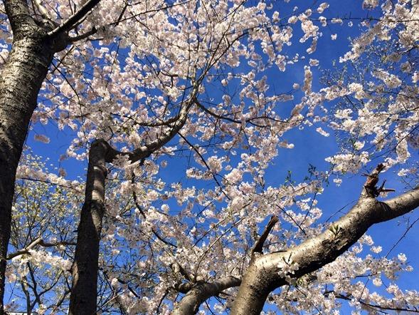 Spring in Charlotte