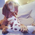 dog with baby toys