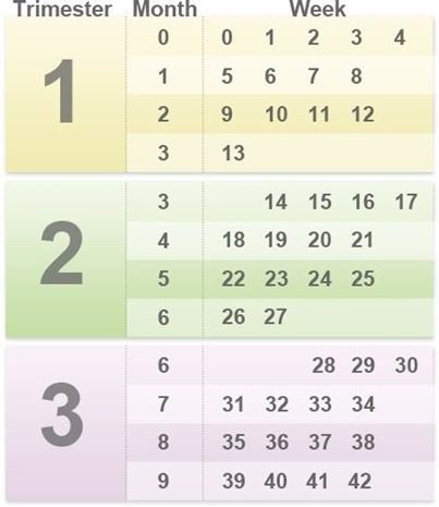 Pregnancy Weeks Months Trimesters Graphic