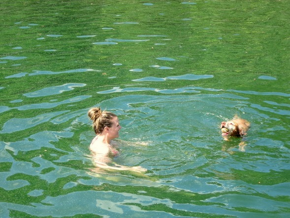 swimming with sadie