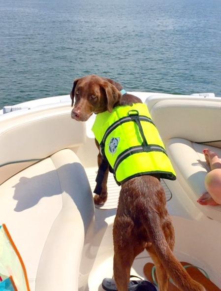 dog life jacket neon
