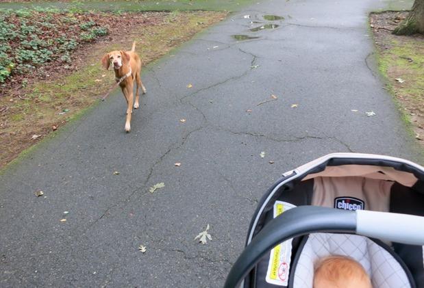 baby and dog walk