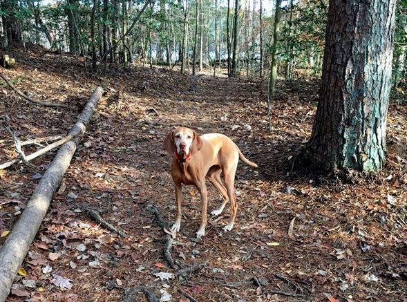 Sadie Hiking