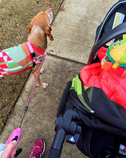 walk run with baby and dog