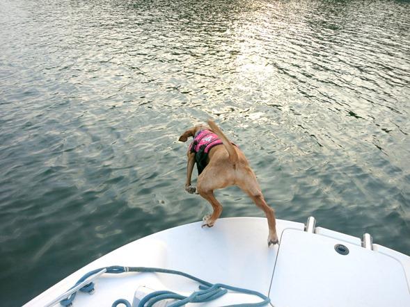 Dog Jumping Into Lake