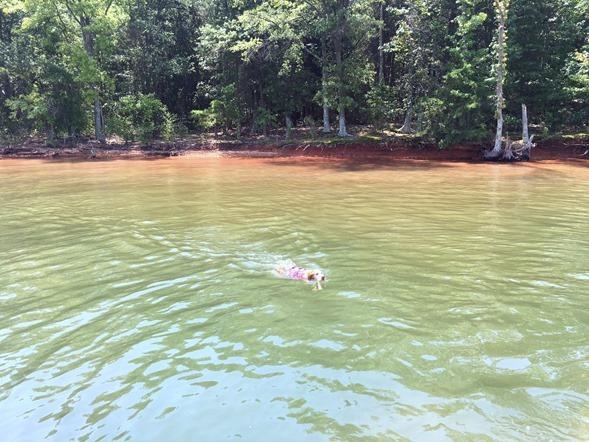 Dog Lake Norman