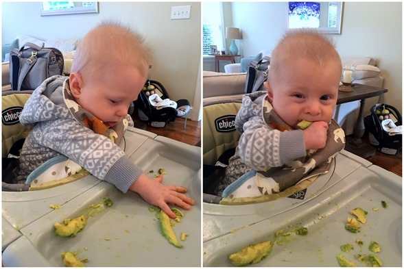 Avocado Baby First Food