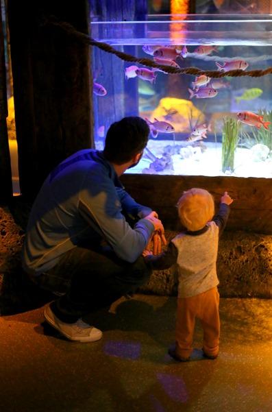 Sea Life Aquarium Concord NC