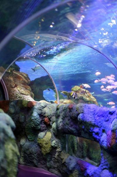 Sea Life Aquarium NC