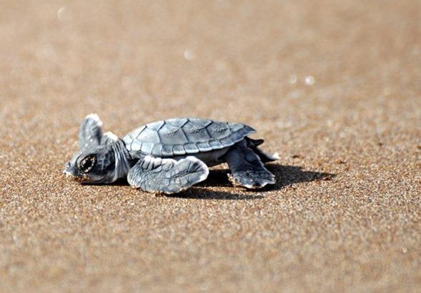 Galapagos Islands Vacation Recap