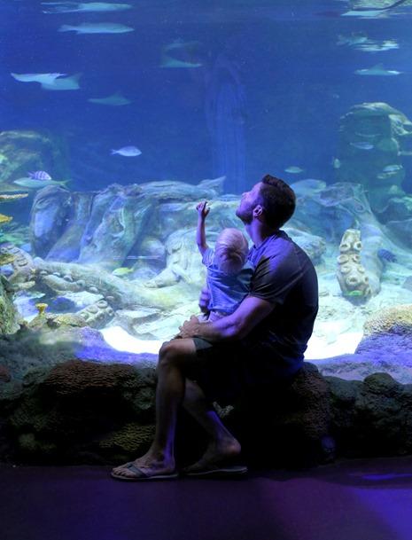 Sea Life Aquarium Concord