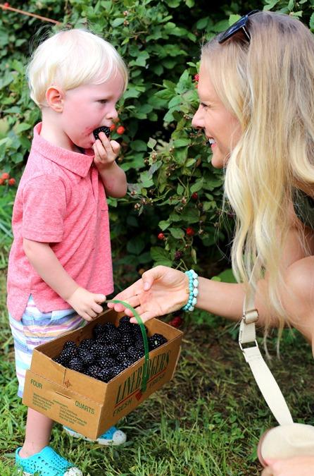 blackberry picking north carolina