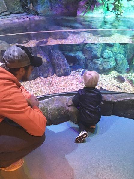 concord nc aquarium