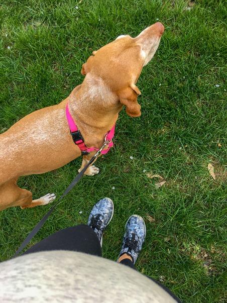 Sadie Walk