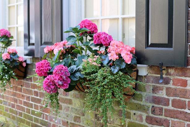 Charleston Window Box Flowers